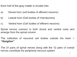 neurophysiology ppt download