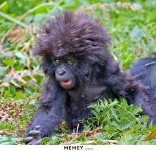 Baby Monkey Meme - monkey memes funny monkey pictures memey com