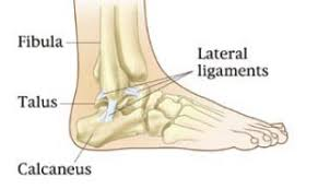 Talus Ligaments Ankles Away U2013 Dr Julian Saunders