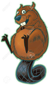 21 best beaver images on pinterest beavers animals and the beaver