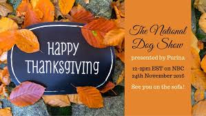 happy dogthanking bodie on the road
