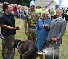Prince Charles Meme - prince charles being attacked by things facebook rosepeter4