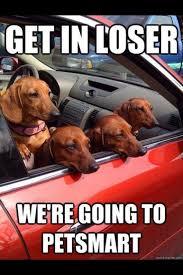 Weiner Dog Meme - bahaha weiner dog bullies cute dogs pinterest weiner dogs