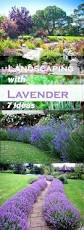 Ideas Landscaping Front Yard - low maintenance front garden ideas nz simple low maintenance front
