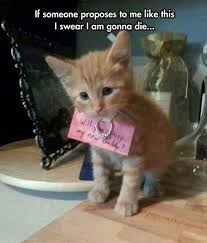 Wedding Proposal Meme - 139 best wedding proposal ideas images on pinterest proposals