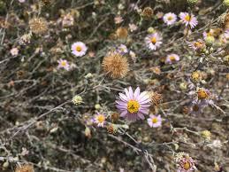 native san diego plants saving san diego u0027s rarest plant species u2013 zoonooz
