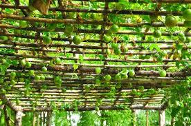 5 of the best climbing plants landscape gardening supplies