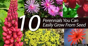10 Best Perennials And Flowers by 10 Perennials You Can Easily Grow From Seed