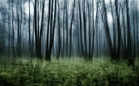 woodland fantasy wallpaper 6898105