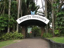 Cairns Botanical Garden by Cairns Attractions Australian Butterfly Sanctuary