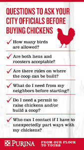 raising backyard chickens in your area purina animal nutrition