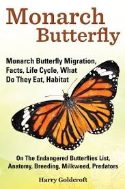 monarch butterfly monarch butterfly migration facts cycle
