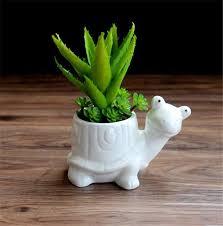 plante verte bureau mignon en pot blanc en céramique succulentes plantes planteur