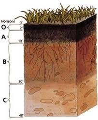 Vegetable Garden Preparation by Stylish Organic Soil For Vegetable Garden Soil Preparation For A