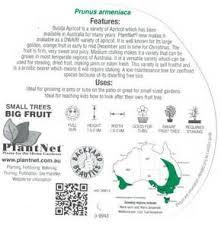 Blackmoor Fruit Trees - fruit tree nurseries uk images 53 best images about landscaping