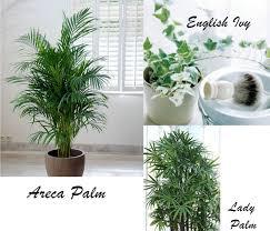 indoor plants ivanias mode