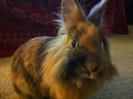 Air Conditioned Rabbit Hutch Pet Tips U2013 Rabbits Animal Coalition Of Delaware County