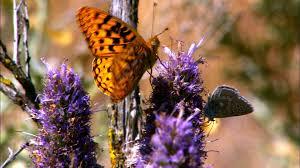 molbak s butterfly garden microsoft pollinator patio open