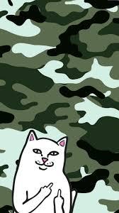 halloween cat background deviantart best 10 cat wallpaper ideas on pinterest iphone wallpaper cat
