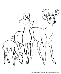 deer family coloring wild animal coloring pages kids