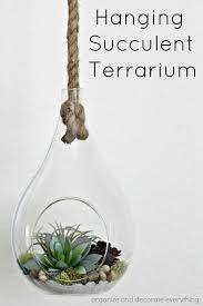 hanging succulent terrarium organize and decorate everything