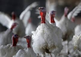 peta s banned thanksgiving ad that you ll never see on tv
