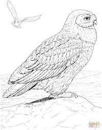 hawk owl super coloring desenhos para pintar pinterest owl