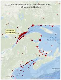 Duck Migration Map Surf Scoter Migration And Distribution Maps All Years Sea Duck