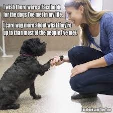 Vet Tech Memes - 38 funny heartwarming share worthy dog memes gallery