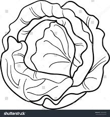 black white cartoon illustration cabbage lettuce stock