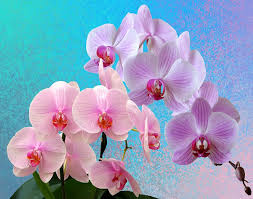 flower orchid orchids flowers orchid flower free photo on pixabay