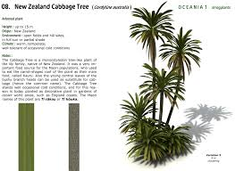plants native to new zealand xfrogplants new zealand cabbage tree xfrog com