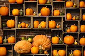 fall pumpkin wallpaper hd orange pumpkin wallpaper hd