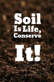 independence quote garden soil slogans and quotes quotes u0026 sayings