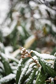 photos of snow forecasters call for a wintry mix of snow freezing rain and sleet
