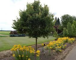 a sneak peak of a wholesale tree nursery the world s best