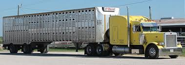 Texas Sale Barn Bowie Livestock Sale Barn In Bowie Texas