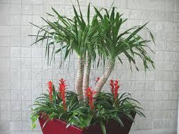 indoor plants tropical