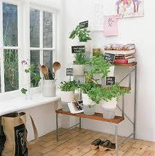 45 best indoor herb garden images on pinterest indoor herbs