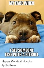 Pitbull Puppy Meme - my face when isee someone else witha pitbull happy monday ocpbr