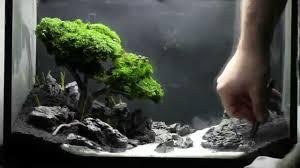 bonsai aquarium acquario bonsai step by step