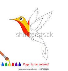 hummingbird coloring book educate preschool kids stock vector