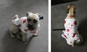 Zombie Dog Halloween Costume November 2014 Gosh