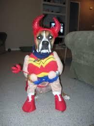 Halloween Costumes Boxer Dogs Rubi Boxer Woman Thedogtrainingsecret