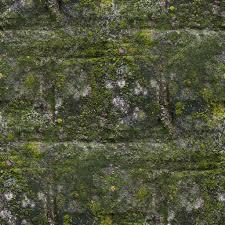Graue Wand Und Stein Moos Alte Grüne Wand Stein Muster Schimmel Graue Textur Bac