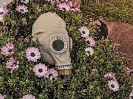 free photo flowers creepy horror grunge mask garden evil max pixel