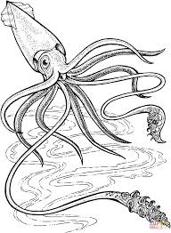 squid coloring pages free coloring pages