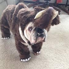 spirit halloween greensboro 11 reasons why bulldogs are my spirit animal