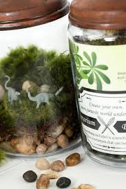 jurassic in a jar diy terrarium kit by twig terrarium twig