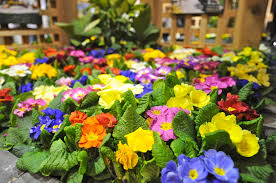 Home And Design Shows Garden Design Garden Design With Conway Home And Garden Show In